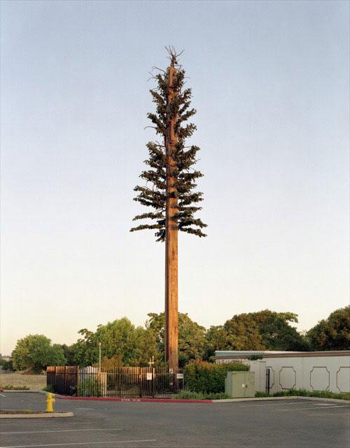 Une antenne relai camouflé dans un faux arbre
